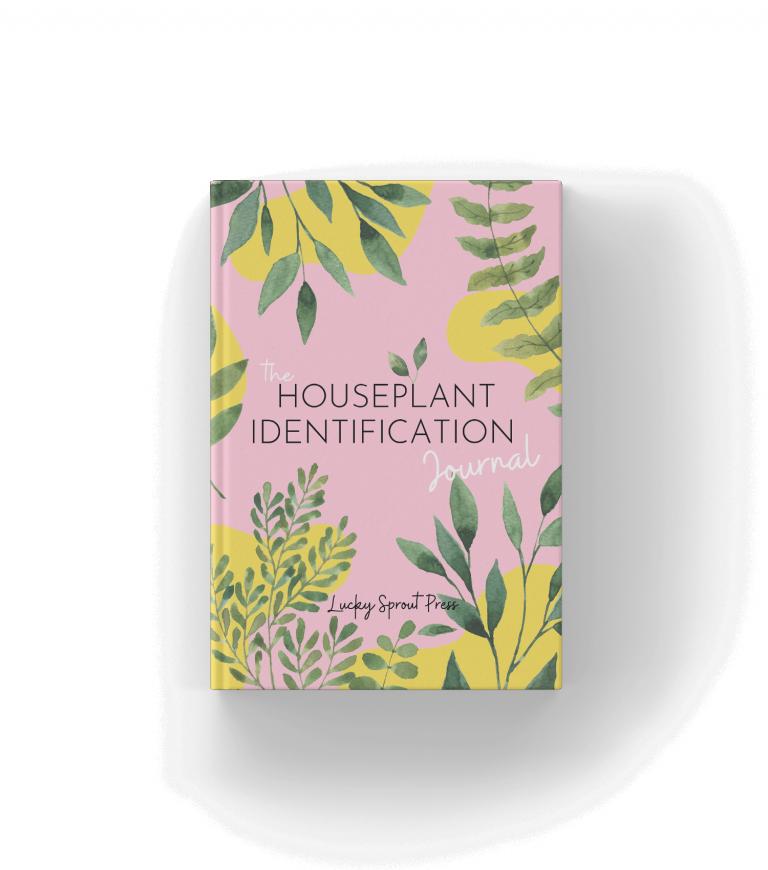 houseplant ID mockup